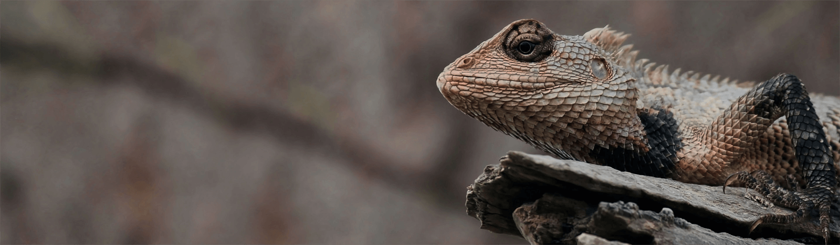 An image of a chameleon to represent adaptability
